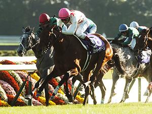 【阪神牝馬ステークス】今年からマイル戦で揃ったメンバー
