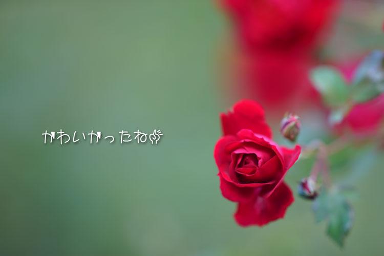 09-20_3941.jpg