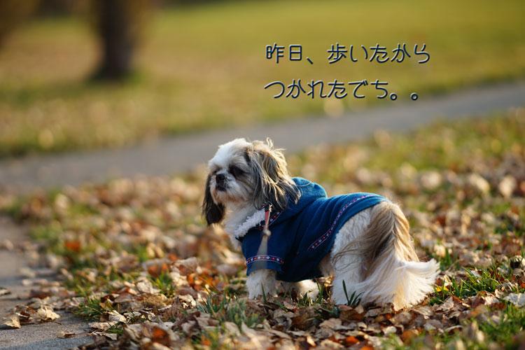 11-03_4980.jpg