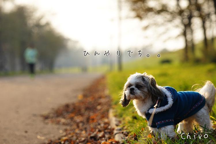 11-03_4989.jpg