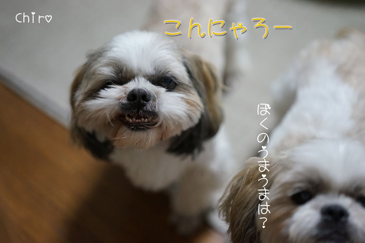 11-16_5204.jpg