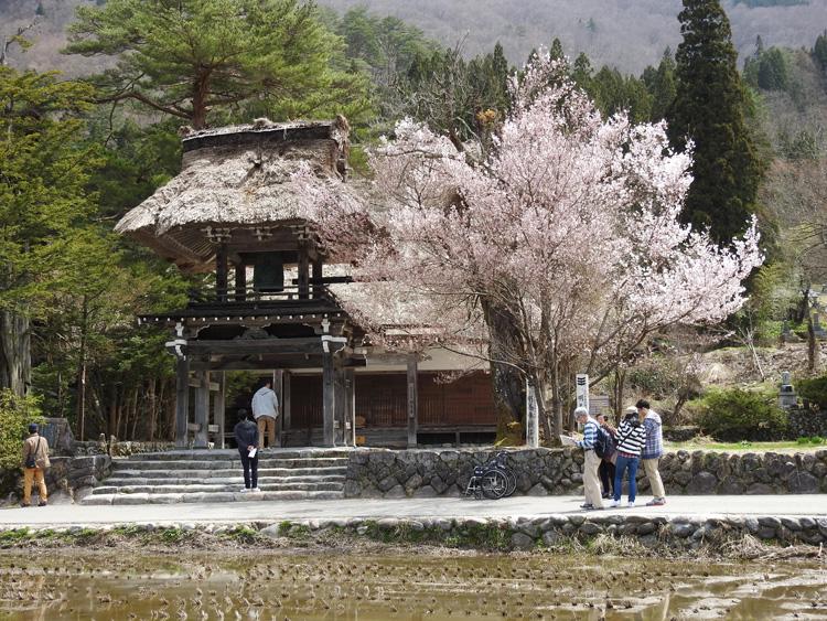 《春☆爛漫》世界遺産 白川郷で満開の桜を楽しむ~旅行【お花見】 ⑤