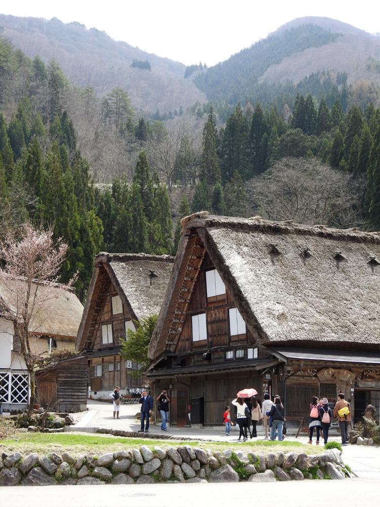 《春☆爛漫》世界遺産 白川郷で満開の桜を楽しむ~旅行【お花見】 ⑥