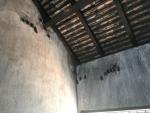戦争博物館にいた蝙蝠