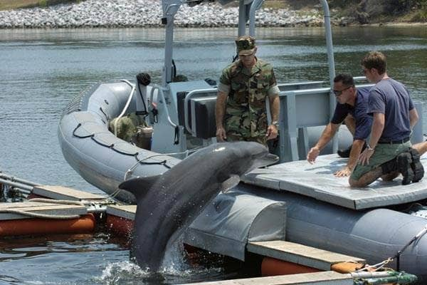 イルカ訓練