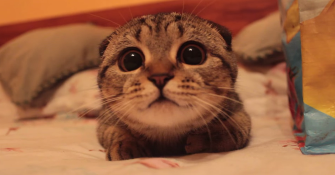 感心する猫