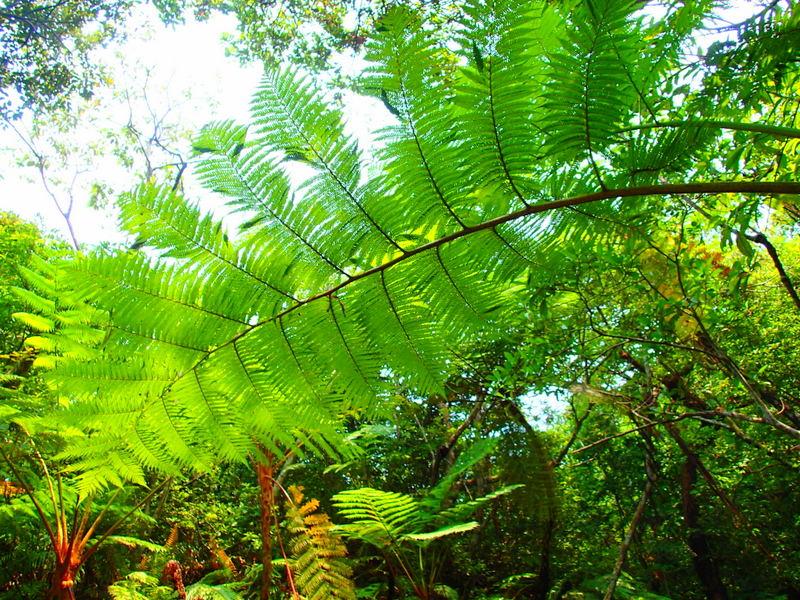 西表島植物