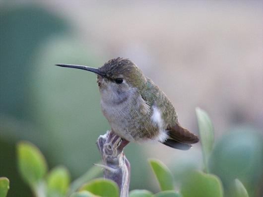 hummingbird-194826_6401.jpg