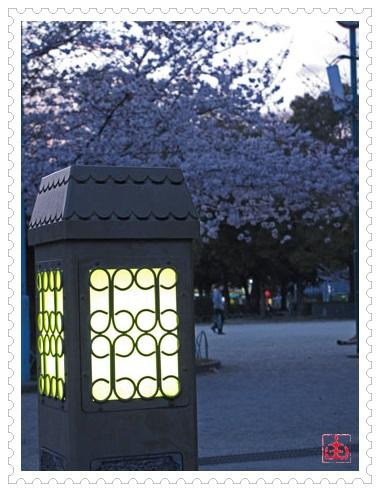 3月31日 桜 5