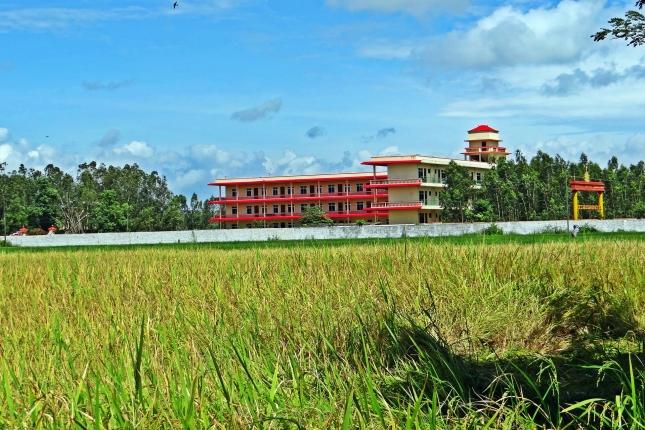 rice-field-195002_1920.jpg