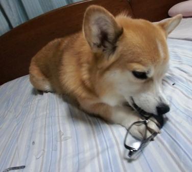 メガネ 7