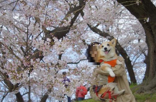 桜 最初の1枚