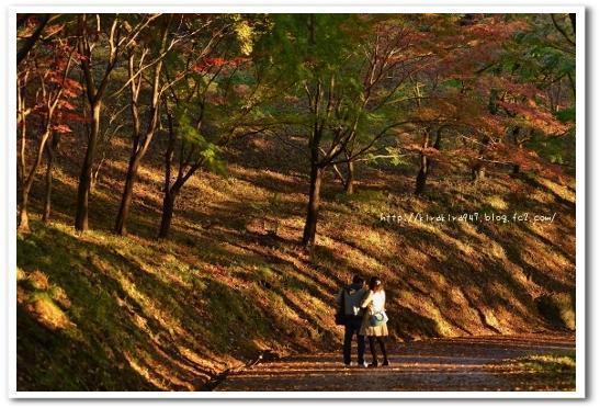織姫公園のもみじ谷