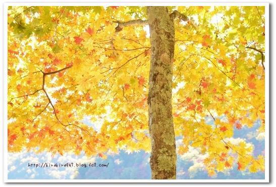 やさしい秋色