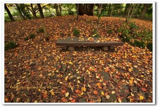秋の栃木県中央公園
