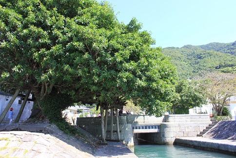 アコウの木と石積埠頭