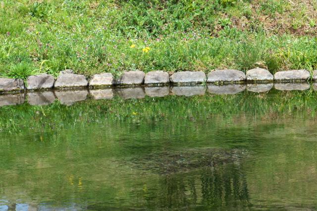 鶴見川の源流