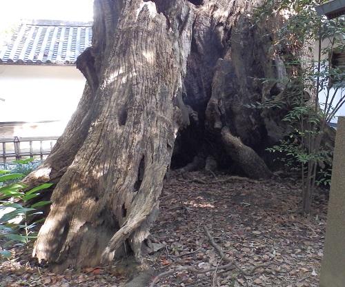 大楠の裏側
