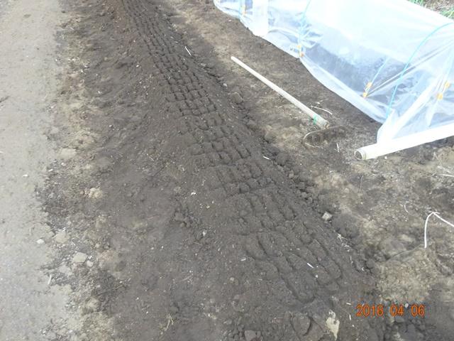 トマト、インゲン、ゴーヤの畝つくり
