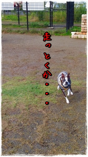 P_20151120_121047.jpg