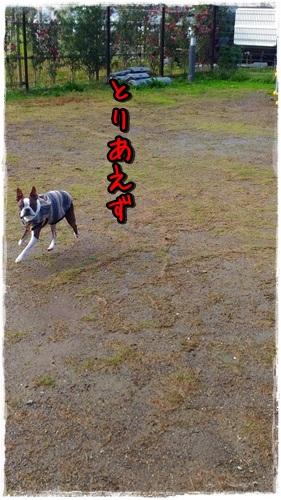 P_20151120_121109.jpg