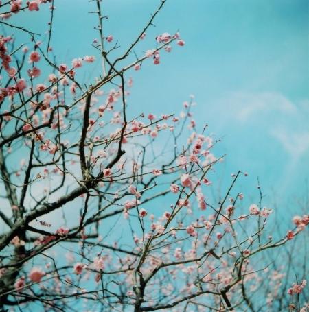 TOY-1310_Yashica.jpg