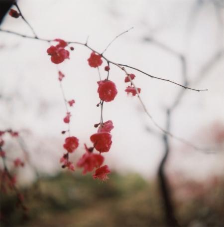 TOY-1318_Yashica.jpg
