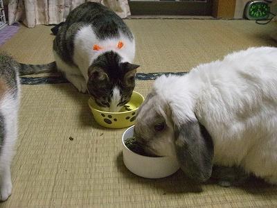 一緒に食べよ