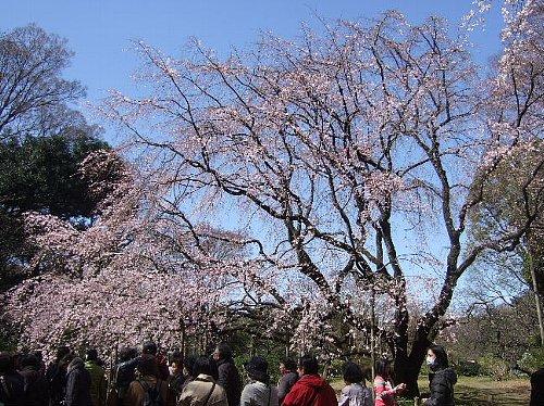 2006_0419セブン会花見0001