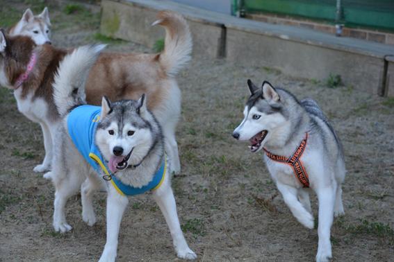 151027 犬山14