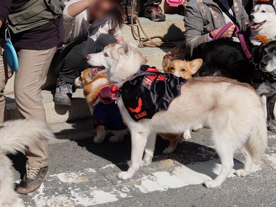 151029 犬山08
