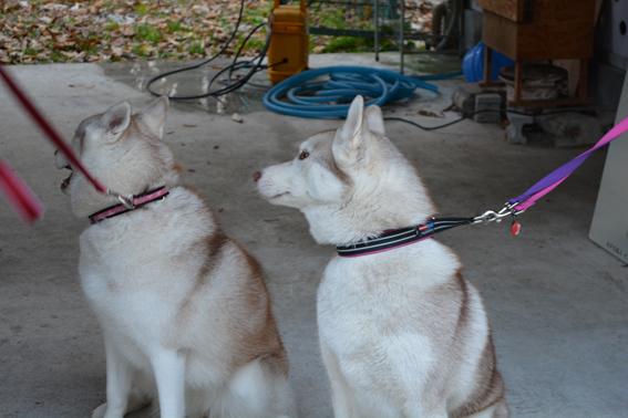 151129 犬舎04