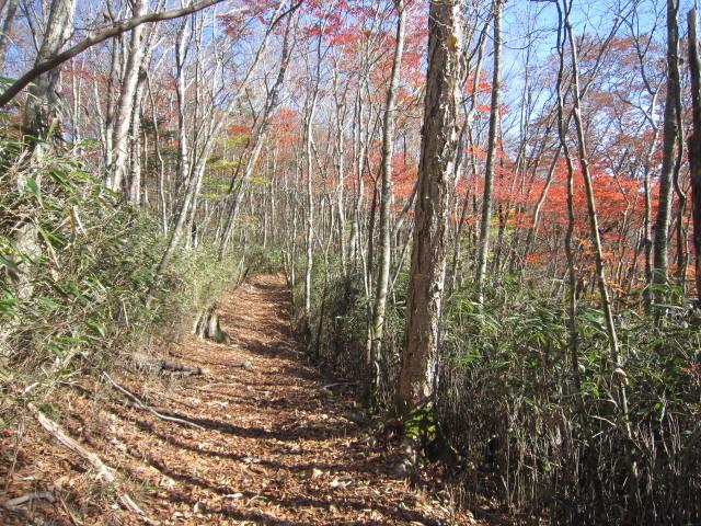 自然林の中を歩く