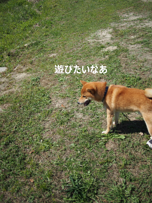 20151026-003.png