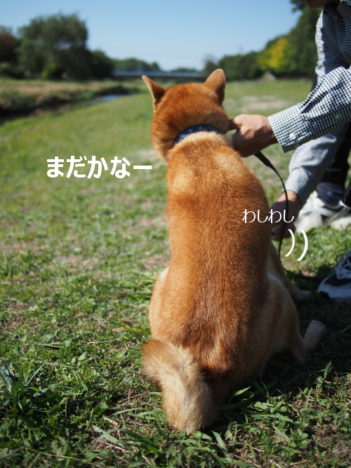 20151026-005.png