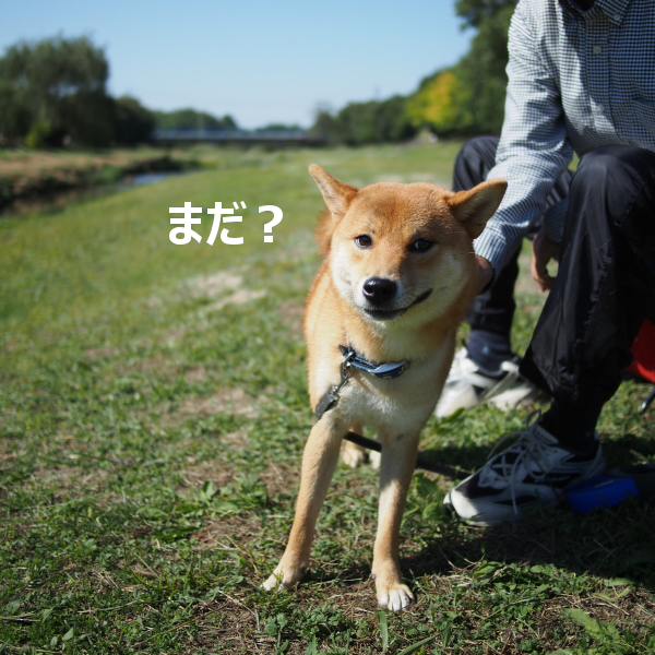 20151026-006.png