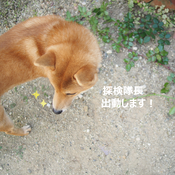 20151030-001.png