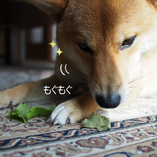 20151122-006.png