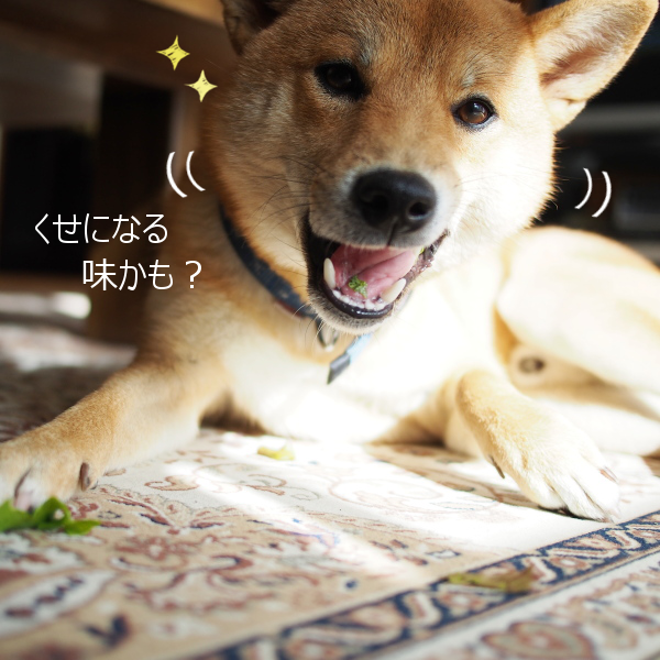 20151122-008.png