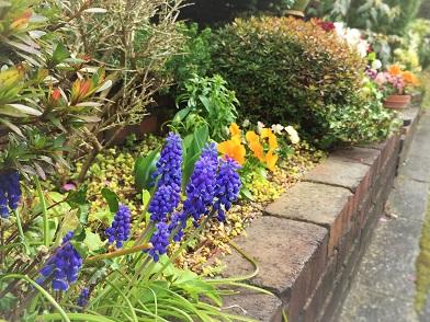 玄関前花壇