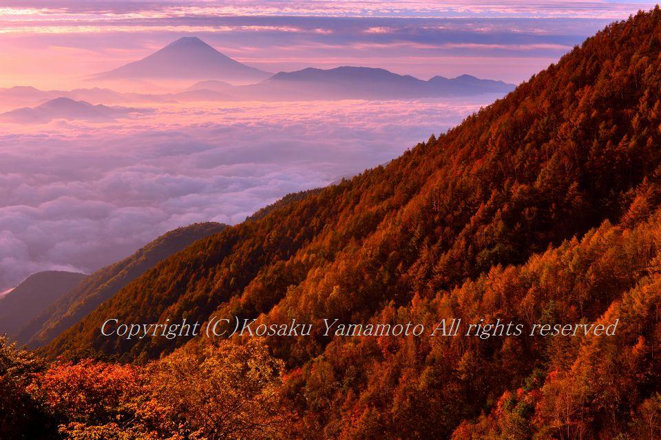 紅葉のシンフォニー (山梨県 富士川町)