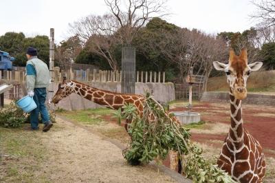 千葉動物公園_5