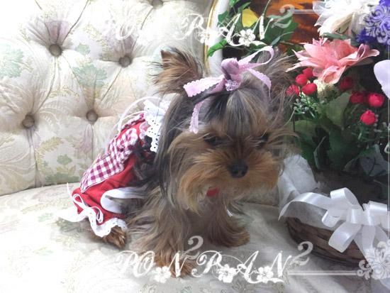 buro49_2016032116494772b.jpg