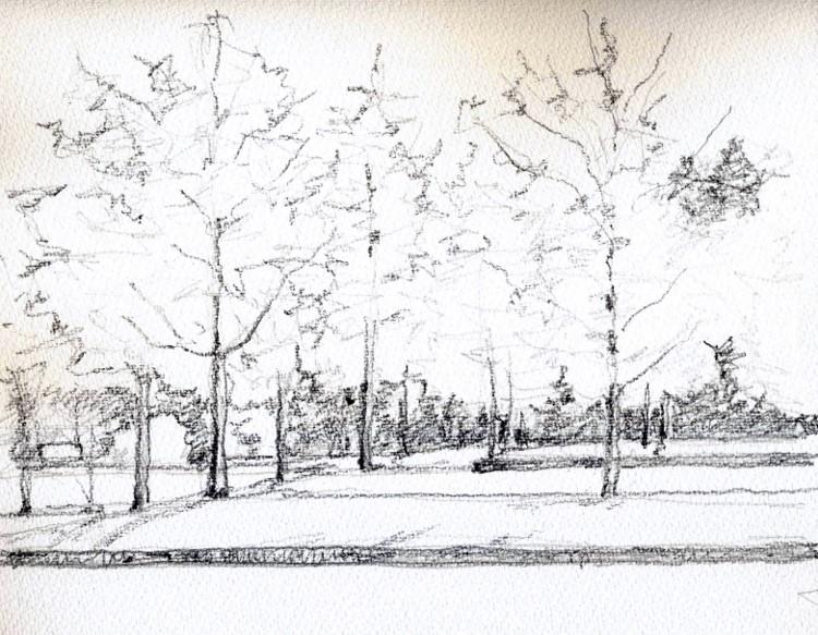 寝屋川公園の銀杏 デッサン (750x583)