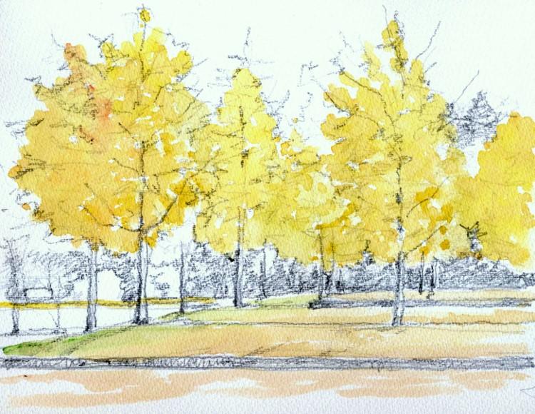 寝屋川公園の銀杏 黄色着彩 (750x580)