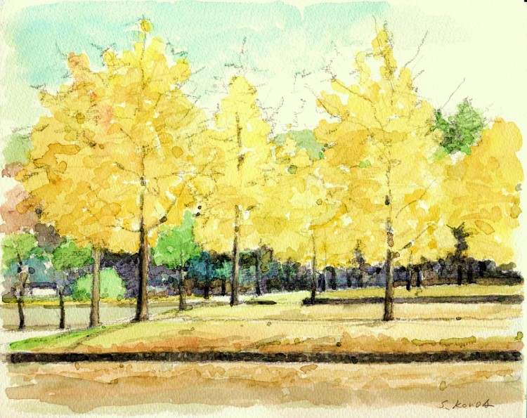 寝屋川公園の銀杏 (750x595)