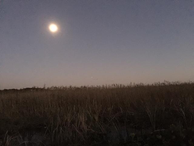 20151025 夕月と鴨