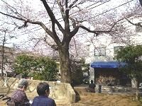 160331お花見 (4)