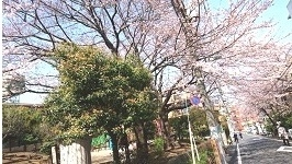 160331お花見その1 (2)