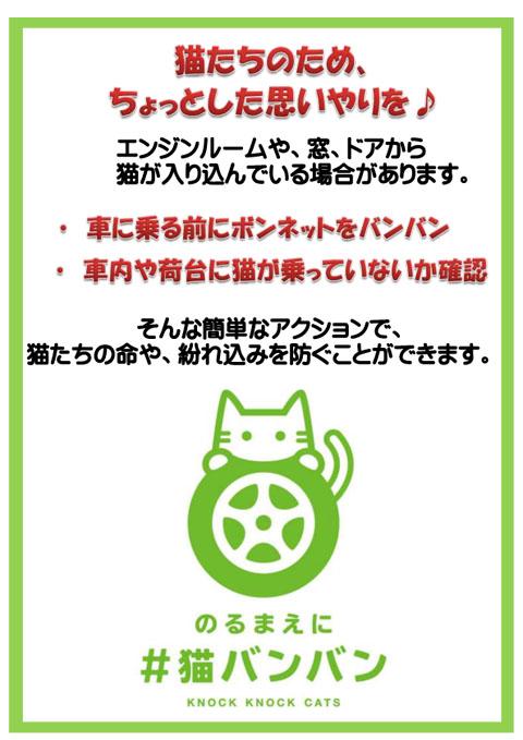 猫バンバンポスター③のコピー